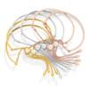 Gold Vermeil Fiji Chain Bracelet - Gold - Monica Vinader